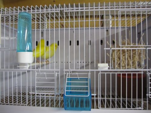 nouvelles_cages_ornibird__018.jpg